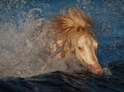 Katarzyna Okrzesik-Mikołajek Horses photography