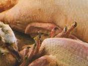 Petit ragoût volailles cidre doux poires, risotto fromage d'emmental noisettes