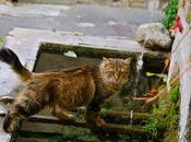 chat fontaine