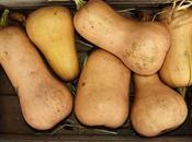 Purée butternut pommes terre
