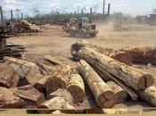 Greenpeace proteste contre l'exportation «bois teinté sang» Brésil