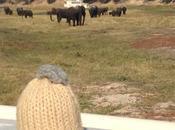 Namibia Chobe