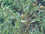 Pourquoi planter pommier dans votre jardin