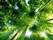araignees forêts ».retour l'animisme pensee ecologique(3)