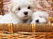 Conseils pour bien choisir panier chien