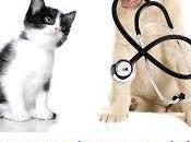 Mutuelle santé animaux Conseil Important Comparatif cher