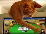 joueurs poker leurs animaux compagnie plutôt chien chat