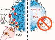 #Cell #cellulesNK #cancer #cDC1 cellules stimulent recrutement cDC1 pour intégration dans microenvironnement tumoral assurant contrôle immunitaire cancer