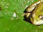 Bactéries animaux dans piscines naturelles