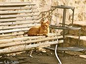 après-midi chat