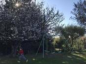 Joyeuses Pâques fleurs cerisiers