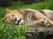 manque sommeil leçons