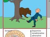 #trendsincognitivescien #événementsstressants #signauxcérébraux événements stressants sont signaux cérébraux formateurs