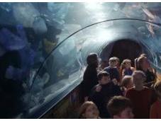 Pollution océans l'aquarium futur
