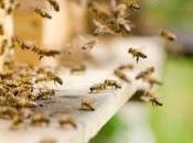 """Pesticides L'Europe néonicotinoïdes """"tueurs d'abeilles"""""""