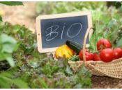 idées shopping pour cultiver potager dans petit espace