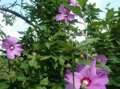 jardin week