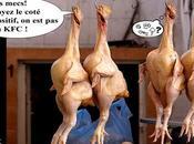 Poulets carburant l'Antibio