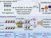 #cell #cancerdelaprostate #19q13 Biologie Implications Cliniques Locus Susceptibilité Cancer Prostate Agressif 19q13