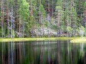 Finlande l'affût grands predateurs