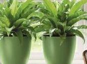 D'où viennent plantes vertes