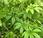plantes pour produire biomasse