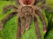 araignées peut-on faire animaux compagnie