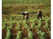 Subventions l'agriculture africaine fausse bonne idée