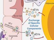 #cell #signalisationcellulaire #métabolisme Signalisation Cellulaire Trafic Vésiculaire Cellules Endothéliales Adipocytyes Gouverné l'État Métabolique