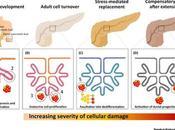 #trendsinendocrinologyandmetabolism #celllulespancréatiquesprogénitrices Cellules pancréatiques progénitrices encore
