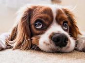 Quelle taille choisir pour tapis chien