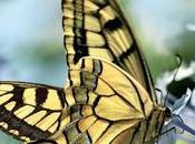 Quels sont insectes pollinisateurs