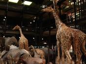 Pause culturelle Muséum National d'Histoire Naturelle