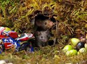 découvre souris dans jardin décide leur construire village