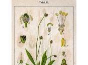 Calmer démangeaisons (varicelle, rougeole, piqûres d'insectes...)