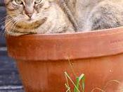 chat jardinier