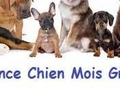 Assurance chien mois gratuit Conseils Importants