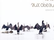 [Podcast #64] Photographier oiseaux avec Alessandro Staelhi