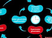 #thelancet #hypertension #insuffisancerénale #patiromer #spironolactone Patiromer versus placebo pour permettre l'utilisation spironolactone chez patients atteints d'hypertension résistante d'insuffisance rénale chronique (AMBER) essai d...