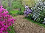 Comment planter rhododendron