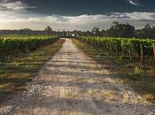 Reconversion professionnelle devenir viticulteur