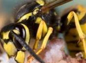 Wasp knife couteau injecte réfrigérant