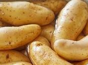 Ratte Touquet est-elle pomme terre nouvelle
