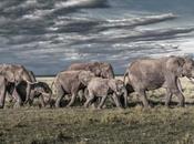 couleurs Kenya, dans savane airs