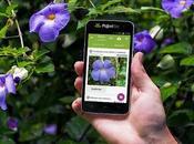 Identifier plante partir d'une photo
