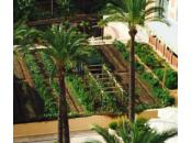Agriculture Urbaine, nouvelle tendance Monaco
