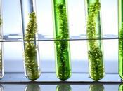 INFECTION CANCER L'algue marine, source précieuse thérapeutiques