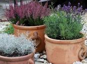 Plantes extérieures pourquoi favoriser pots terre cuite