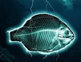Contre destruction l'océan disparition pêcheurs artisans