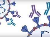 COVID-19 Vers test d'anticorps masse, accessible moins coûteux